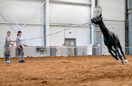 http://www.crocus-expo.ru/upload/crocus-expo/EquiForum-2010/4.jpg