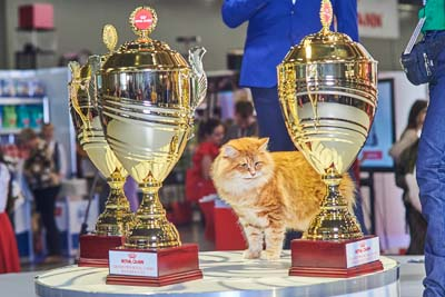 Royal Canin Grand PRIX 2017